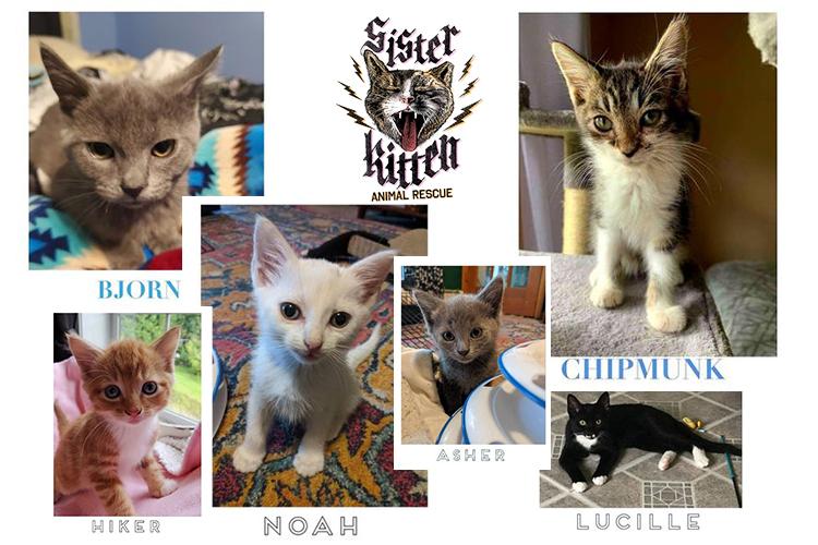 Meet Our Pets!